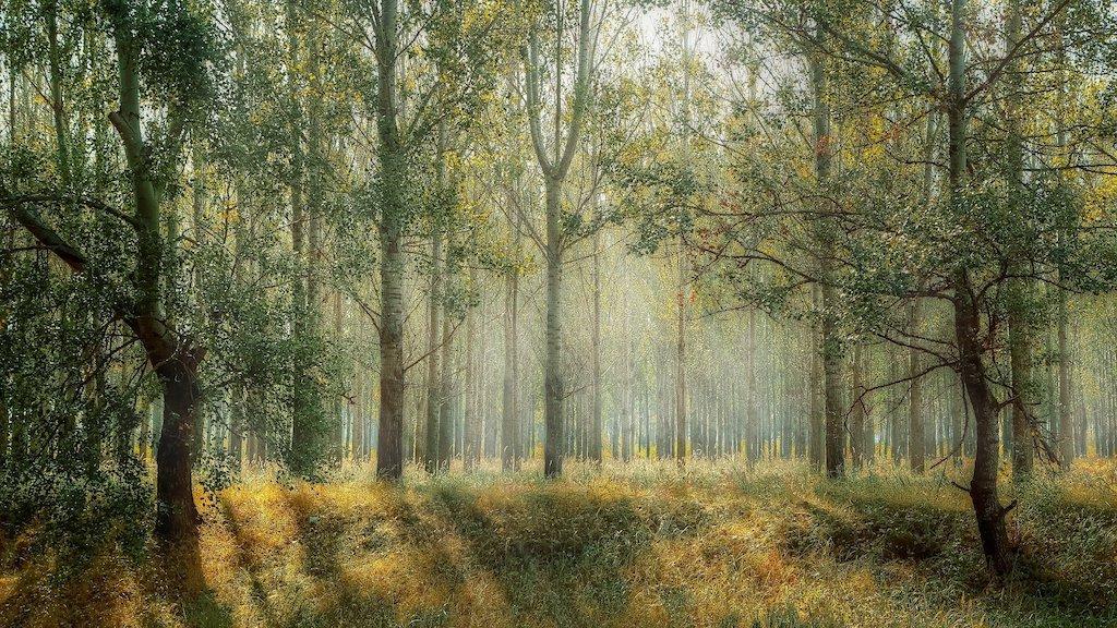 Wald Klimawandel